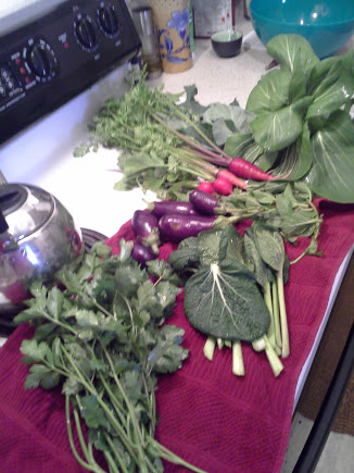 Italian parsley & cilantro, eggplant, misome, mint, carrots, radishes, collards, and pak choi.
