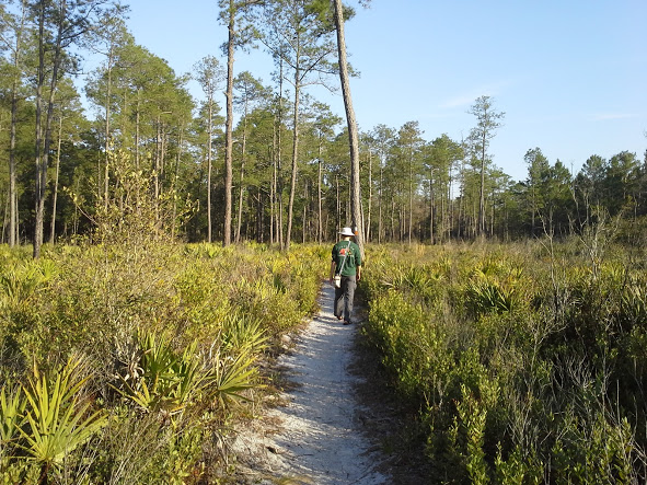 Yan walking through pine flatwoods.