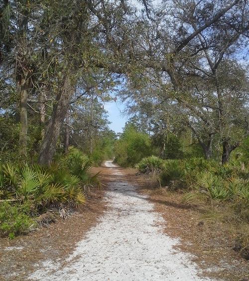 Arboretum trail.