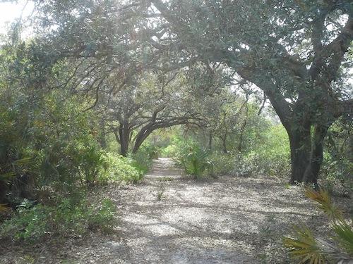 Light through the live oaks.