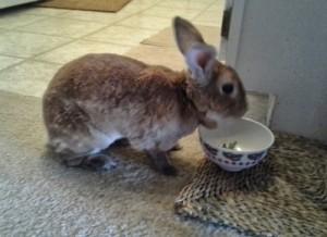 Scruffy bunny!